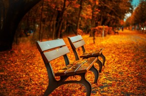 bench-forest-trees-path-2